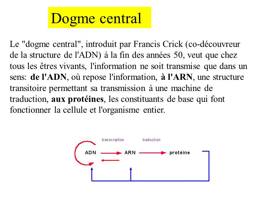 Dogme central Le