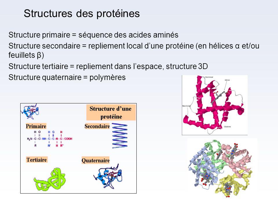 Structures des protéines Structure primaire = séquence des acides aminés Structure secondaire = repliement local dune protéine (en hélices α et/ou feu