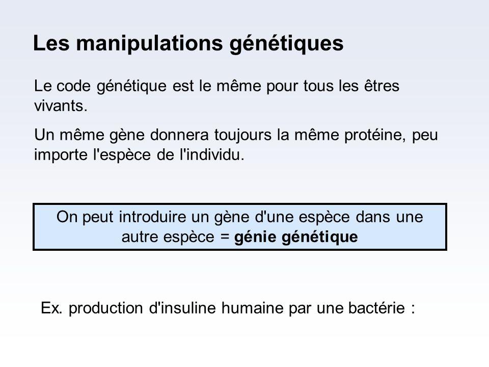 Les manipulations génétiques Le code génétique est le même pour tous les êtres vivants. Un même gène donnera toujours la même protéine, peu importe l'