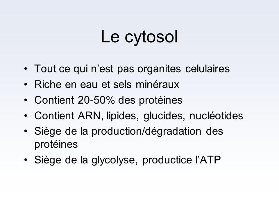 Le cytosol Tout ce qui nest pas organites celulaires Riche en eau et sels minéraux Contient 20-50% des protéines Contient ARN, lipides, glucides, nucl