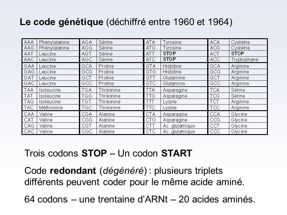 Le code génétique (déchiffré entre 1960 et 1964) Trois codons STOP – Un codon START Code redondant (dégénéré) : plusieurs triplets différents peuvent