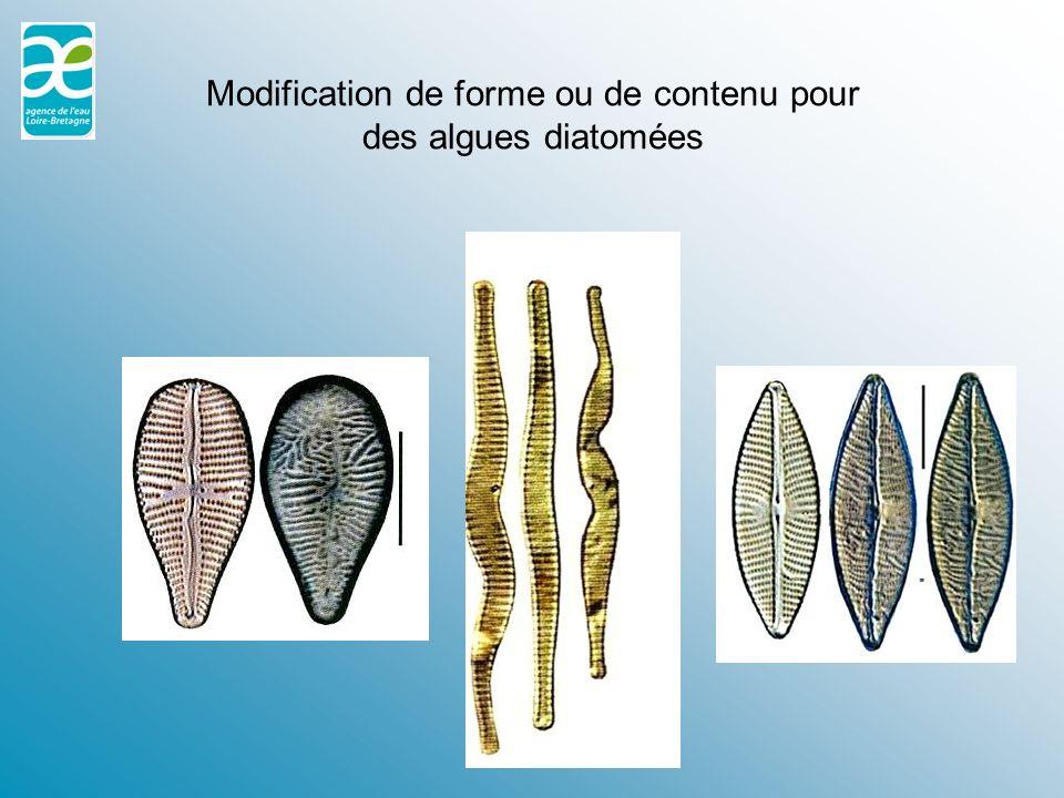 Modification de forme ou de contenu pour des algues diatomées
