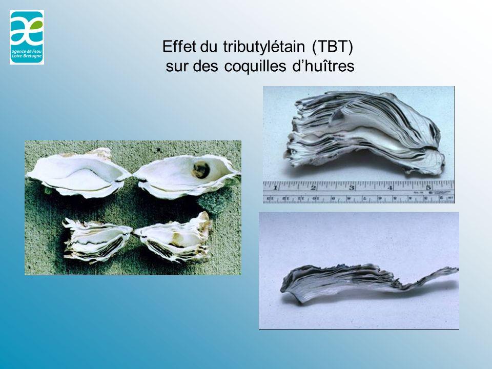 réponses morphologiques : atrophie de la nageoire caudale (plie) ulcérations tégumentaires (flet)