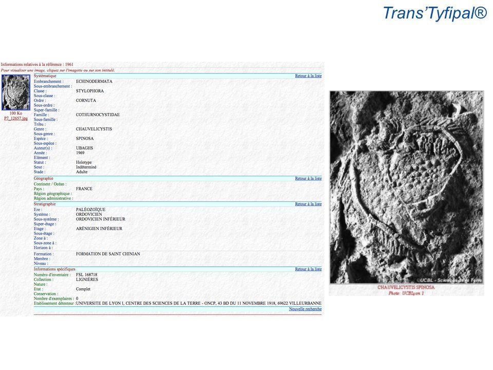 TransTyfipal®