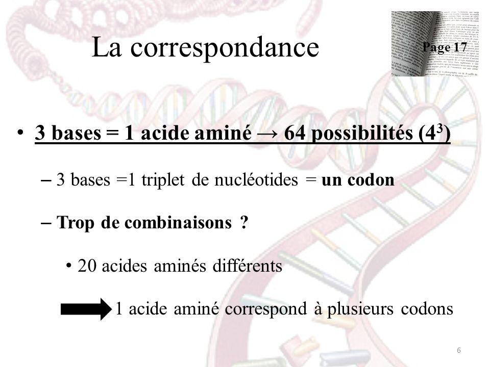 La correspondance 3 bases = 1 acide aminé 64 possibilités (4 3 ) – 3 bases =1 triplet de nucléotides = un codon – Trop de combinaisons ? 20 acides ami