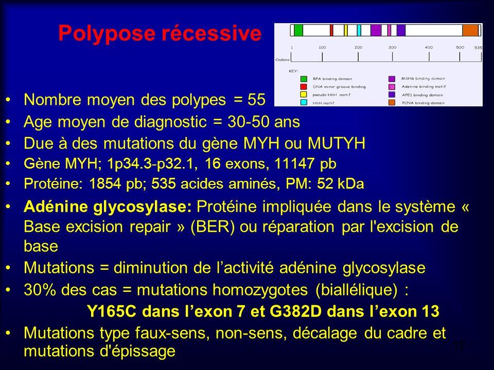 Polypose récessive Nombre moyen des polypes = 55 Age moyen de diagnostic = 30-50 ans Due à des mutations du gène MYH ou MUTYH Gène MYH; 1p34.3-p32.1,