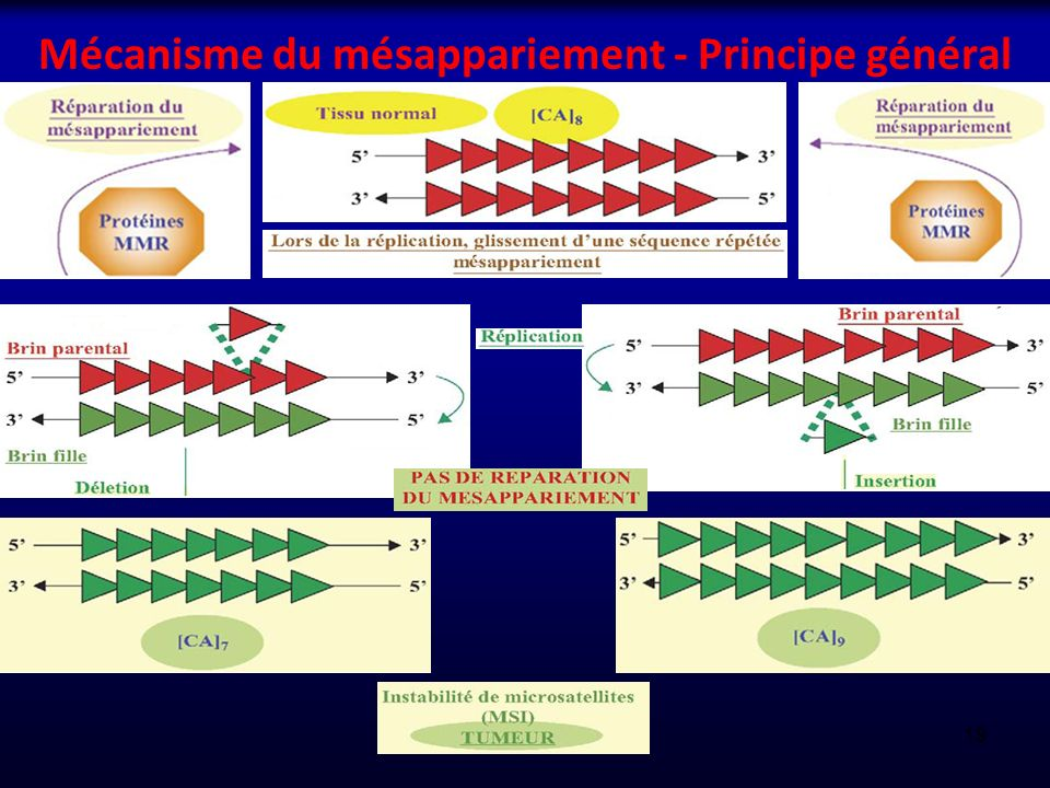 Mécanisme du mésappariement - Principe général 19