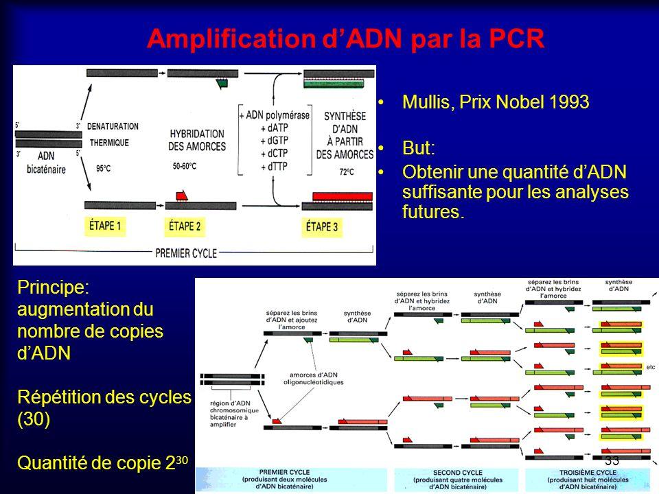Amplification dADN par la PCR Mullis, Prix Nobel 1993 But: Obtenir une quantité dADN suffisante pour les analyses futures. Principe: augmentation du n