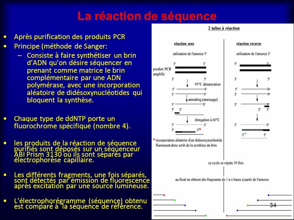 La réaction de séquence Après purification des produits PCR Principe (méthode de Sanger: –Consiste à faire synthétiser un brin dADN qu'on désire séque