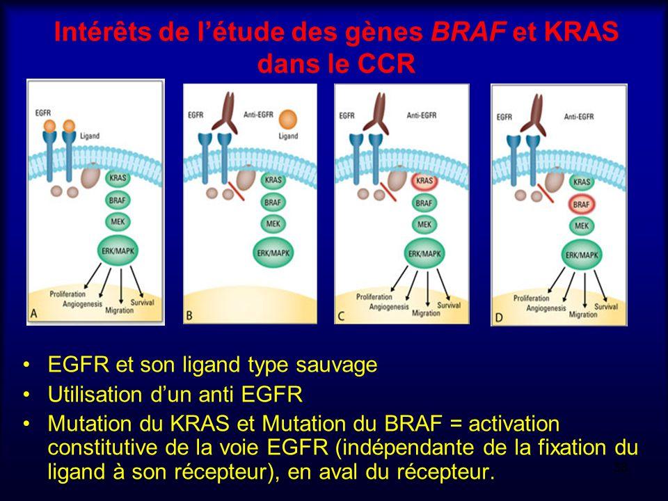 Intérêts de létude des gènes BRAF et KRAS dans le CCR EGFR et son ligand type sauvage Utilisation dun anti EGFR Mutation du KRAS et Mutation du BRAF =