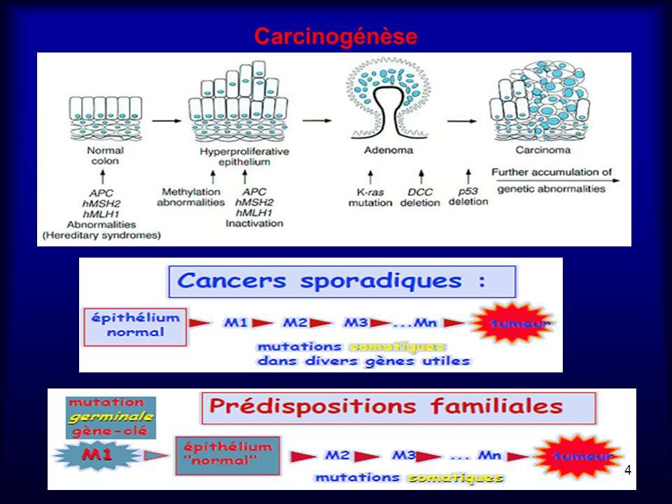 Carcinogénèse 4