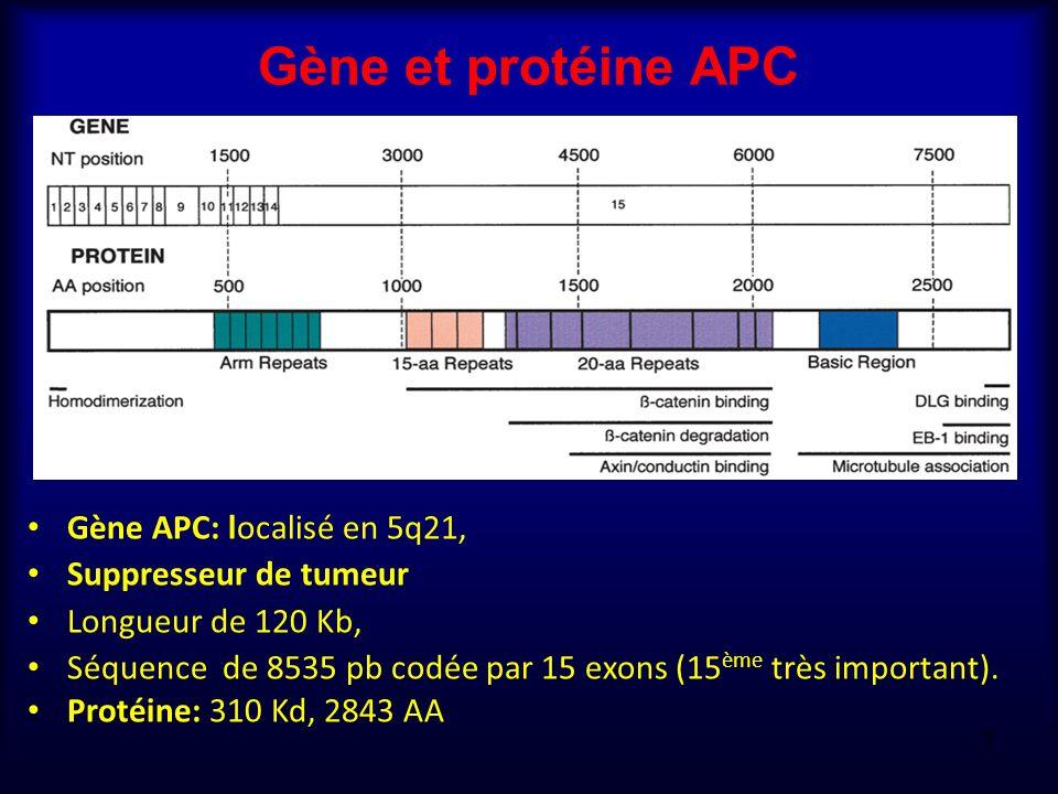 Gène et protéine APC Gène APC: localisé en 5q21, Suppresseur de tumeur Longueur de 120 Kb, Séquence de 8535 pb codée par 15 exons (15 ème très importa