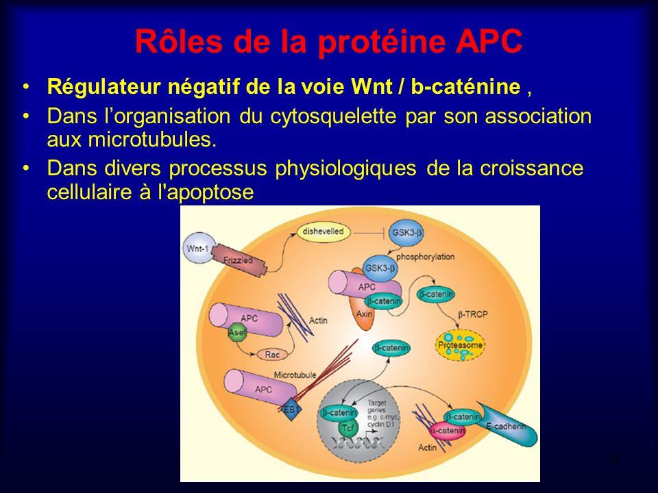 Rôles de la protéine APC Régulateur négatif de la voie Wnt / b-caténine, Dans lorganisation du cytosquelette par son association aux microtubules. Dan