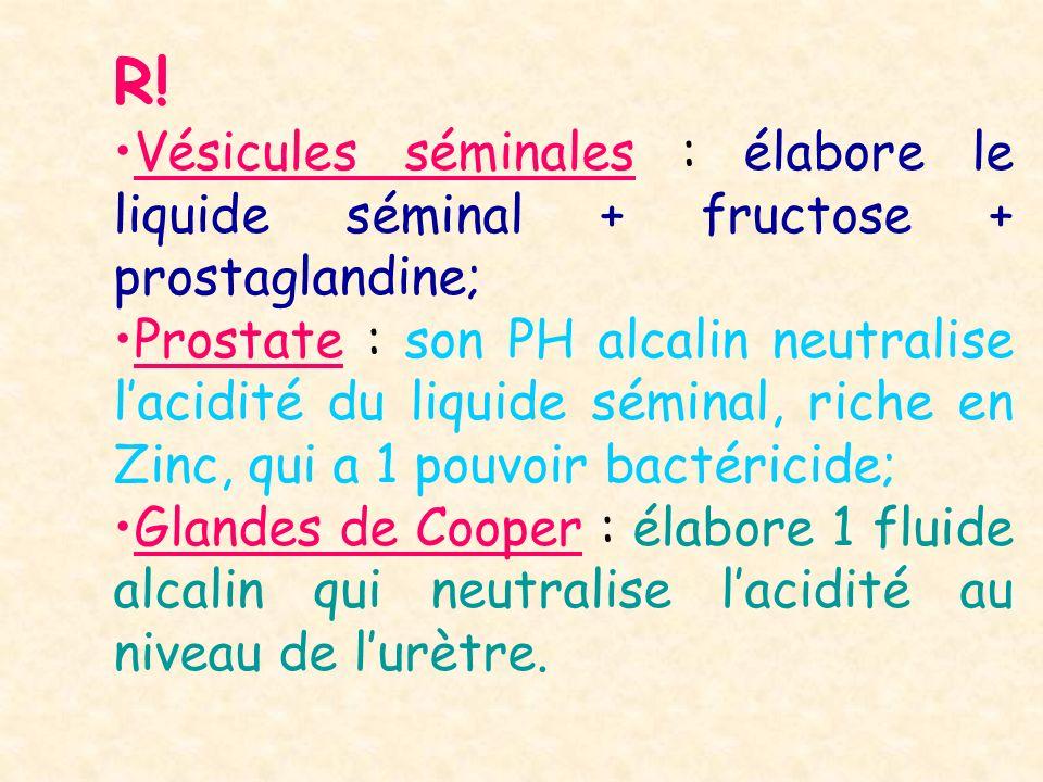 R! Vésicules séminales : élabore le liquide séminal + fructose + prostaglandine; Prostate : son PH alcalin neutralise lacidité du liquide séminal, ric
