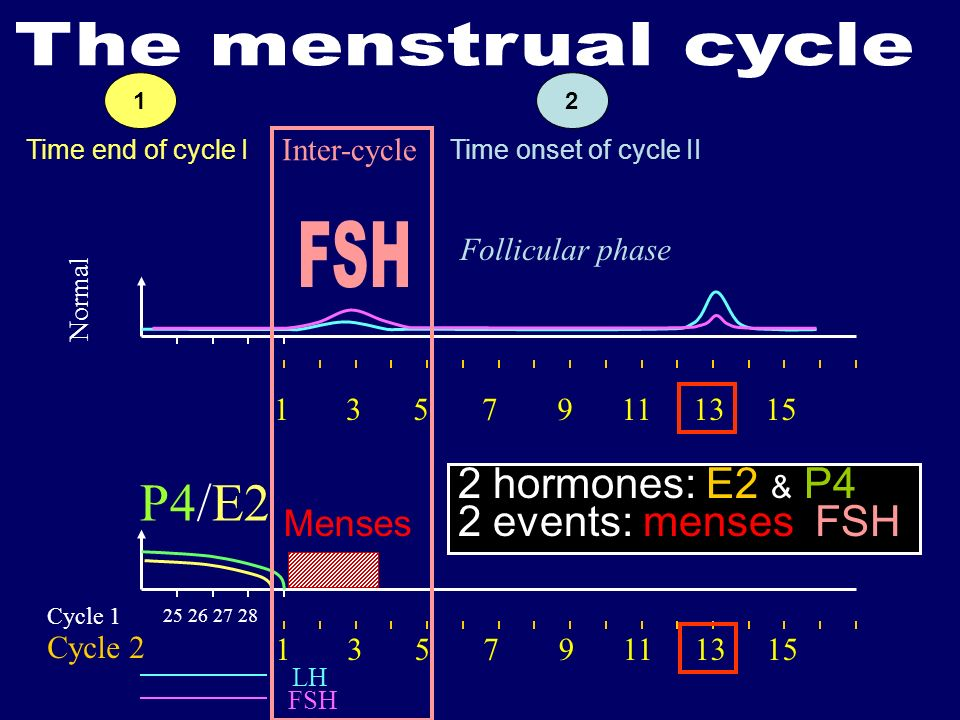 25 26 27 28 Cycle 1 Cycle 2 LH FSH P4/E2 Normal 13579111315 13579111315 Menses Inter-cycle 2 hormones: E2, & P4 2 events: menses, FSH Time onset of cycle II Follicular phase Time end of cycle I 21