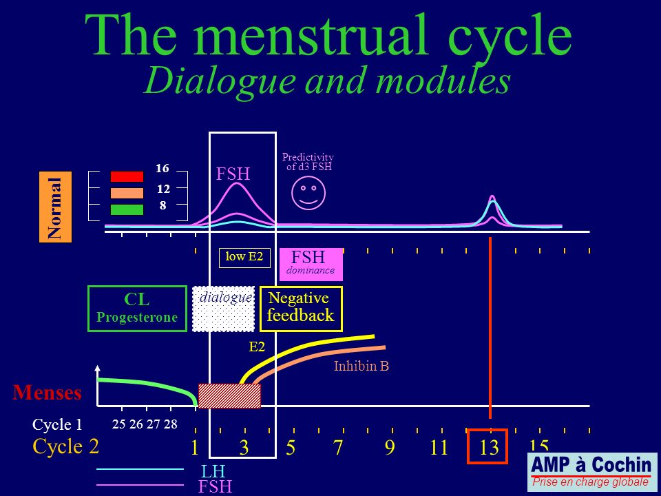 25 26 27 28 Cycle 1 Cycle 2 LH FSH Menses The menstrual cycle Dialogue and modules 13579111315 CL Progesterone FSH 8 12 16 Predictivity of d3 FSH low
