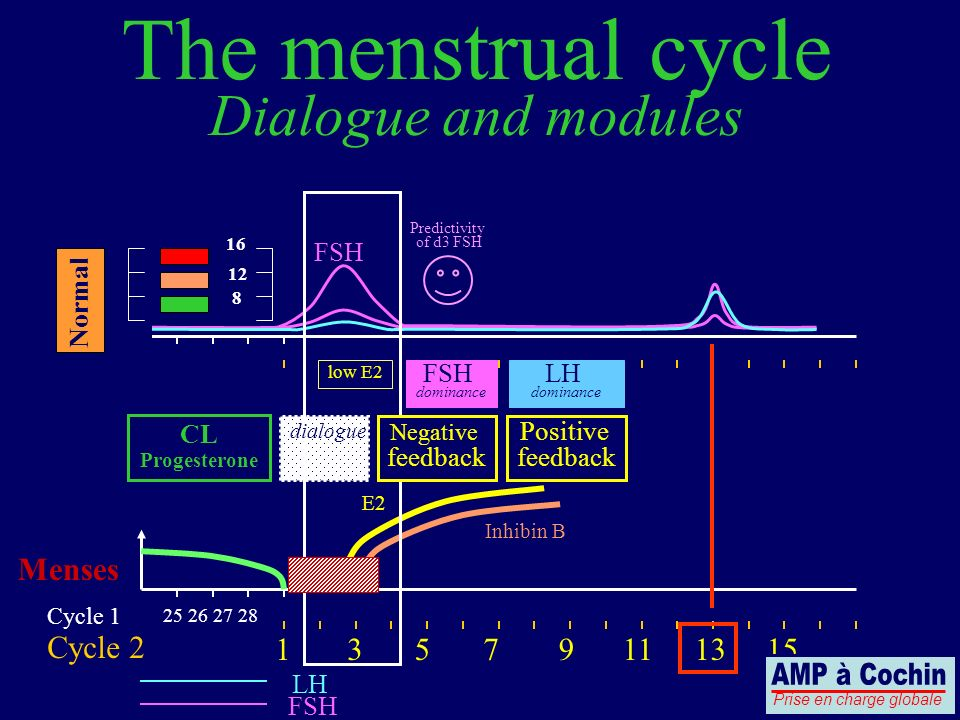 25 26 27 28 Cycle 1 Cycle 2 LH FSH Menses The menstrual cycle Dialogue and modules 13579111315 Positive feedback CL Progesterone FSH 8 12 16 Predictivity of d3 FSH low E2 Inhibin B dialogue E2 Negative feedback Normal FSH dominance LH dominance Prise en charge globale