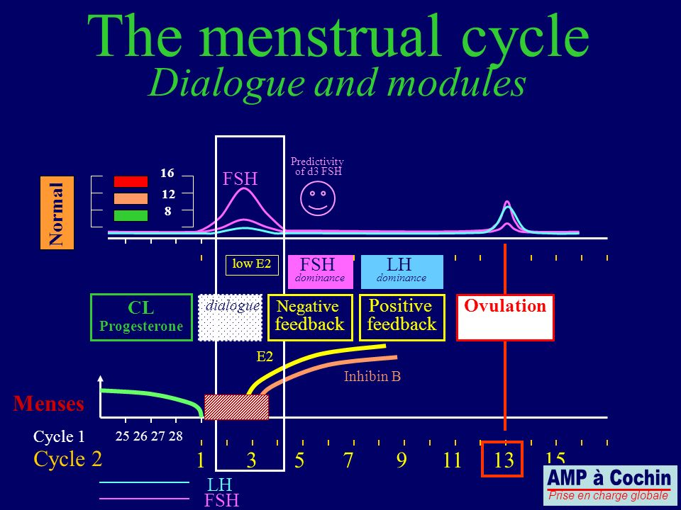 25 26 27 28 Cycle 1 Cycle 2 LH FSH Menses The menstrual cycle Dialogue and modules 13579111315 Positive feedback Ovulation CL Progesterone FSH 8 12 16 Predictivity of d3 FSH low E2 Inhibin B dialogue E2 Negative feedback Normal FSH dominance LH dominance Prise en charge globale