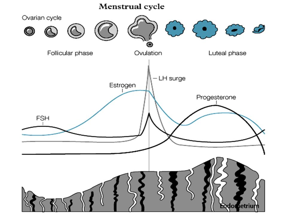 25 26 27 28 Cycle 1 Cycle 2 LH FSH Menses The menstrual cycle Dialogue and modules 13579111315 Normal CL Progesterone Prise en charge globale