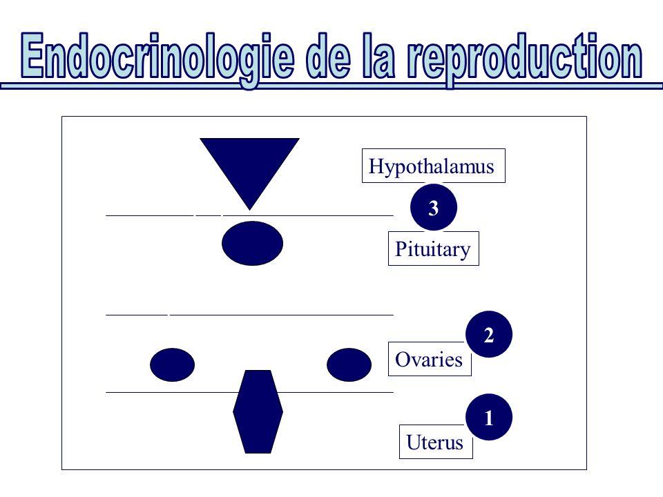 Uterus Ovaries Pituitary Hypothalamus Classification fonctionnelle: par étages 1 3 2