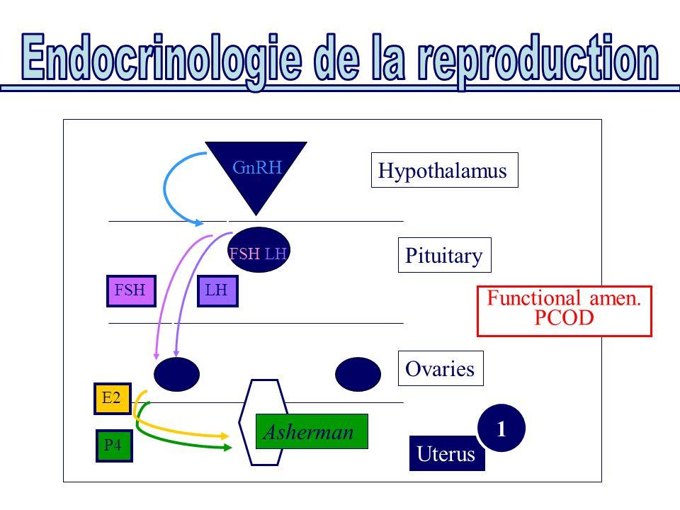 Uterus Ovaries Pituitary E2 P4 FSHLH FSH/LH GnRH Asherman Hypothalamus Functional amen. PCOD 1