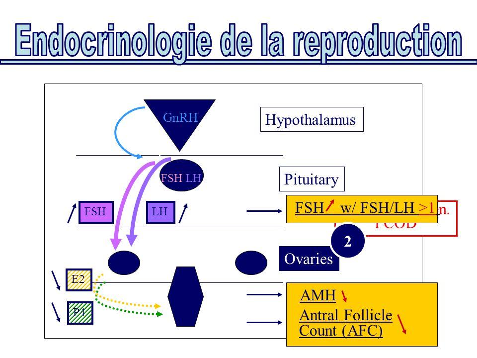Ovaries Hypothalamus FSH/LH GnRH AMH Antral Follicle Count (AFC) FSHLH E2 P4 Pituitary Functional amen. PCOD FSH w/ FSH/LH >1 2