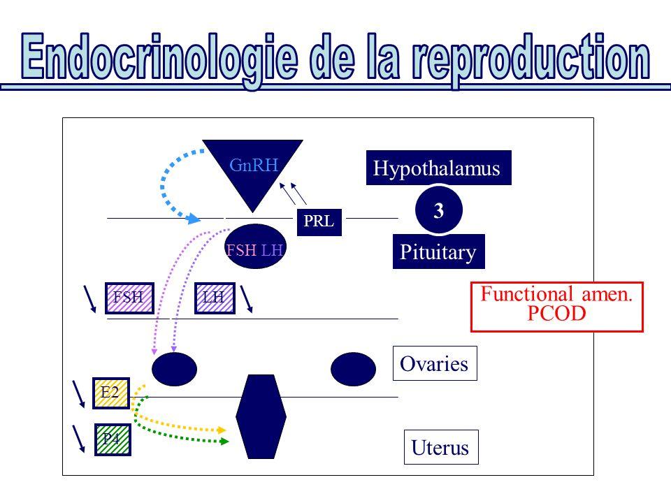 Uterus Ovaries Pituitary Hypothalamus E2 P4 FSH/LH GnRH FSHLH PRL 3 Functional amen. PCOD