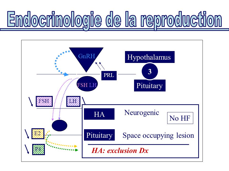 Pituitary Hypothalamus FSH/LH GnRH PRL Uterus Ovaries E2 P4 FSHLH HA Neurogenic PRL PituitarySpace occupying lesion HA: exclusion Dx No HF 3
