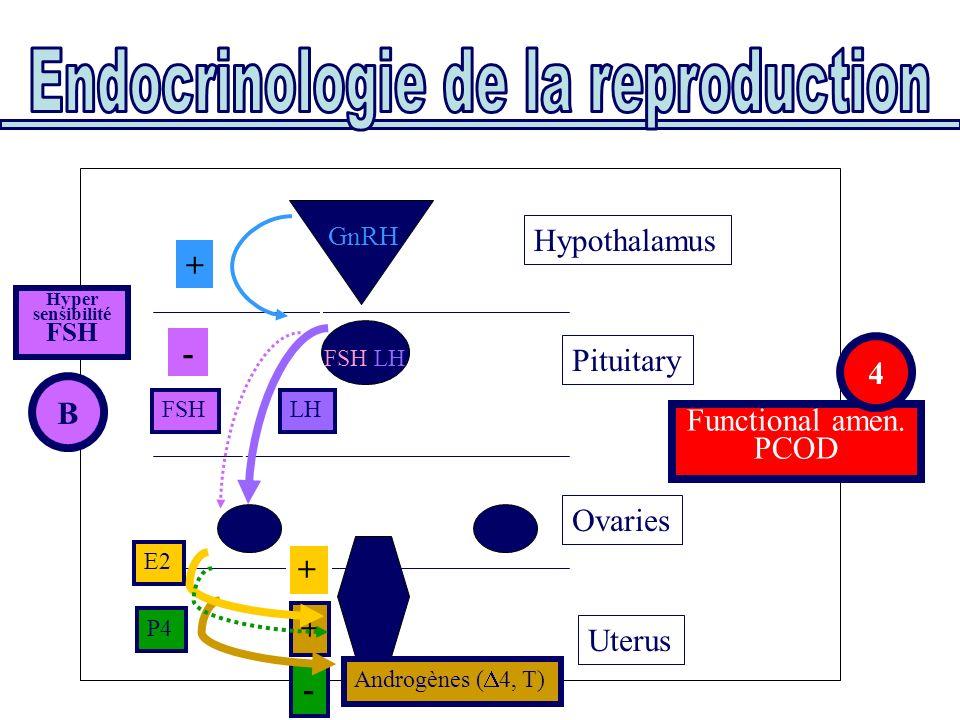 Uterus Ovaries Pituitary Functional amen. PCOD Hypothalamus E2 P4 FSHLH FSH/LH GnRH + - B Hyper sensibilité FSH 4 Androgènes ( 4, T) - + +