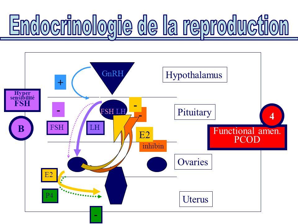 Uterus Ovaries Pituitary Functional amen. PCOD Hypothalamus E2 P4 FSHLH FSH/LH GnRH + - - - - B Hyper sensibilité FSH inhibin E2 4