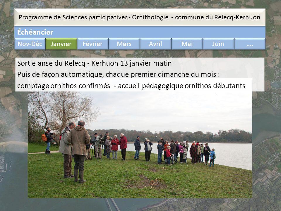 Échéancier Programme de Sciences participatives - Ornithologie - commune du Relecq-Kerhuon Nov-Déc Janvier Février Mars Avril Mai Juin …. Sortie anse