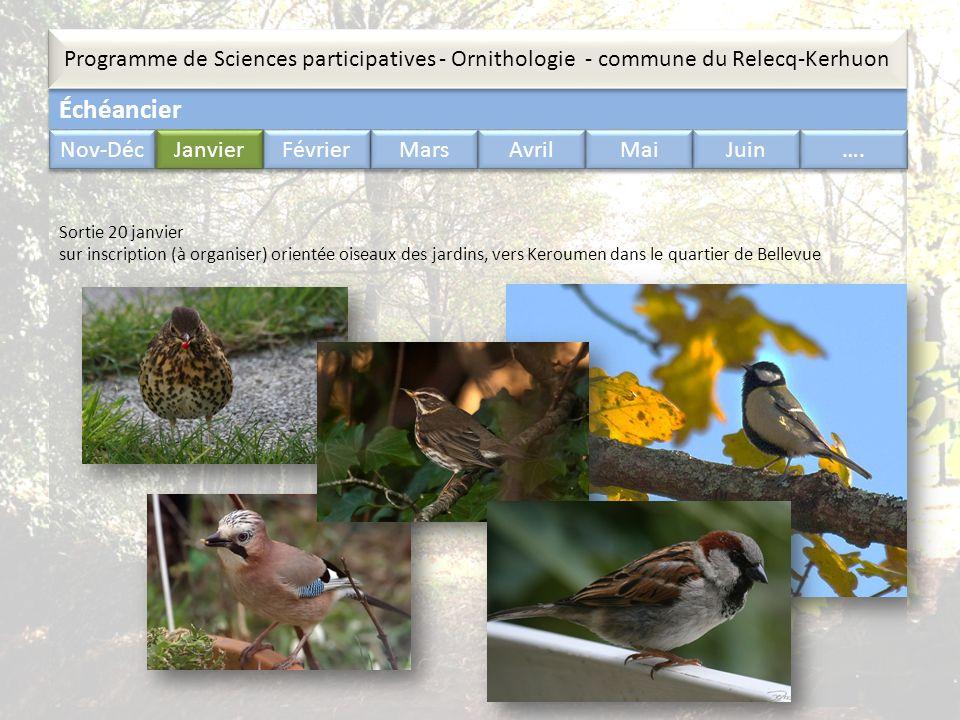 Échéancier Programme de Sciences participatives - Ornithologie - commune du Relecq-Kerhuon Nov-Déc Janvier Février Mars Avril Mai Juin …. Sortie 20 ja