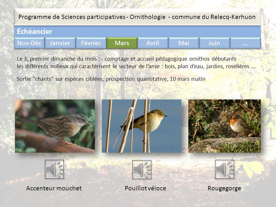 Échéancier Programme de Sciences participatives - Ornithologie - commune du Relecq-Kerhuon Nov-Déc Janvier Février Mars Avril Mai Juin …. Sortie