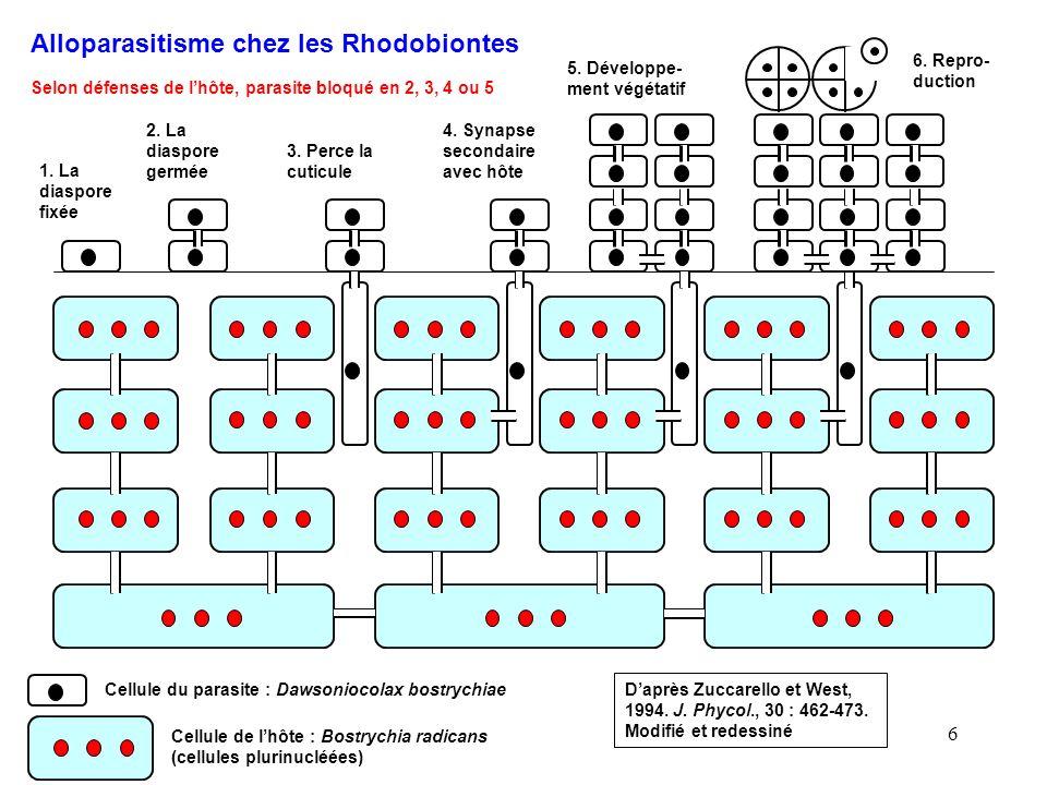 6 Alloparasitisme chez les Rhodobiontes Cellule du parasite : Dawsoniocolax bostrychiae Cellule de lhôte : Bostrychia radicans (cellules plurinucléées
