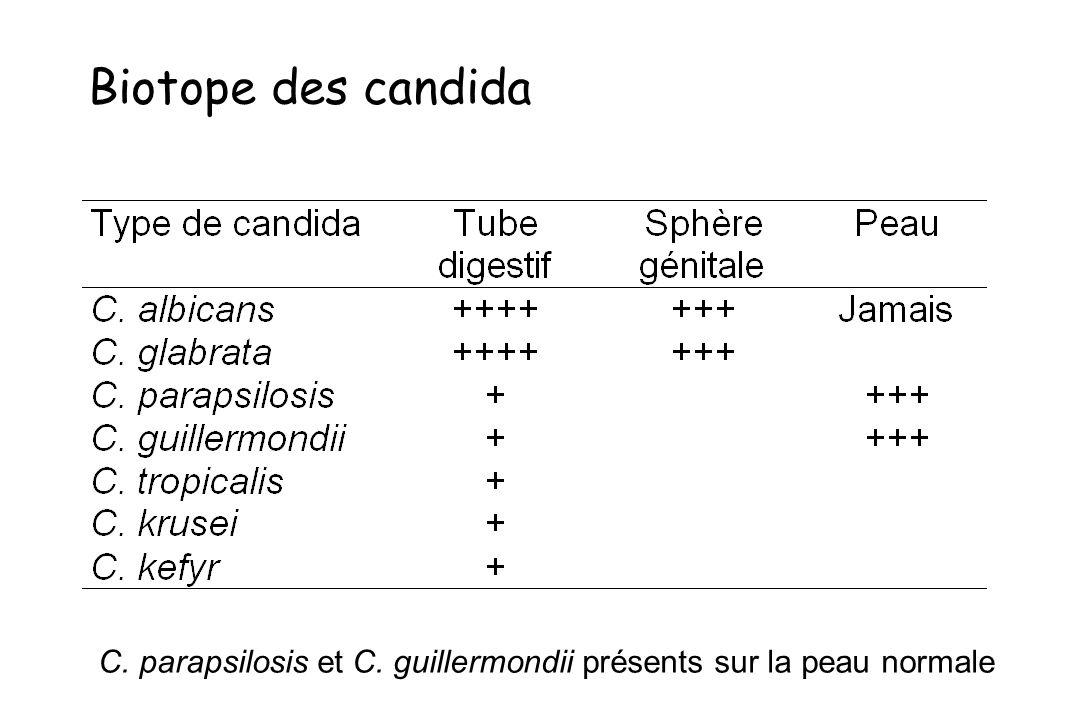 une grande diversité Candida albicans : 40-60% Candida non albicans –C.