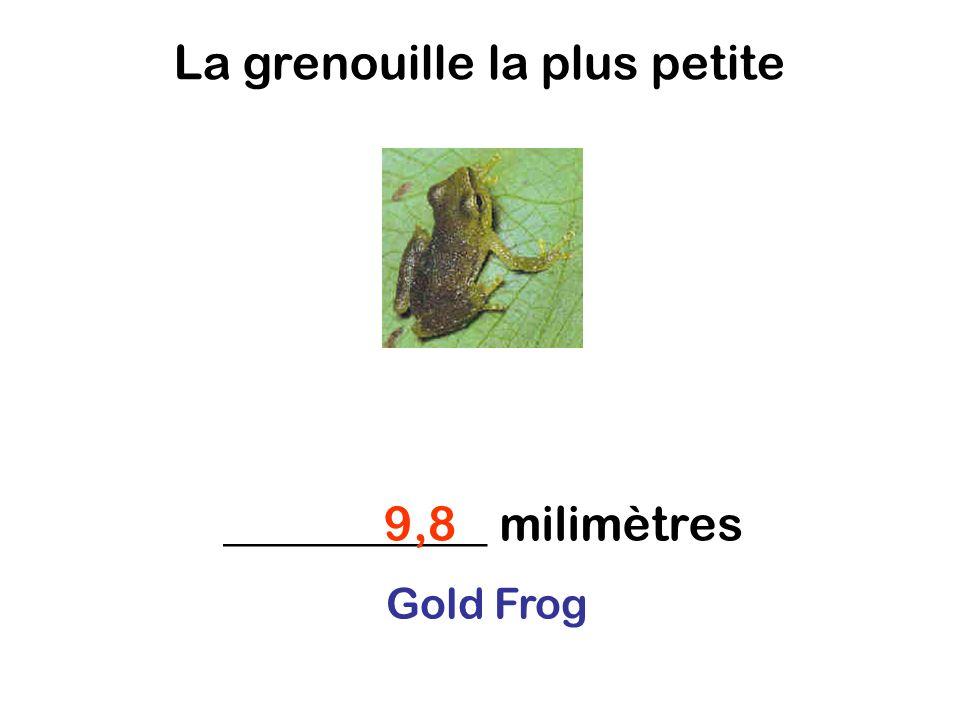 La grenouille la plus petite ___________ milimètres9,8 Gold Frog