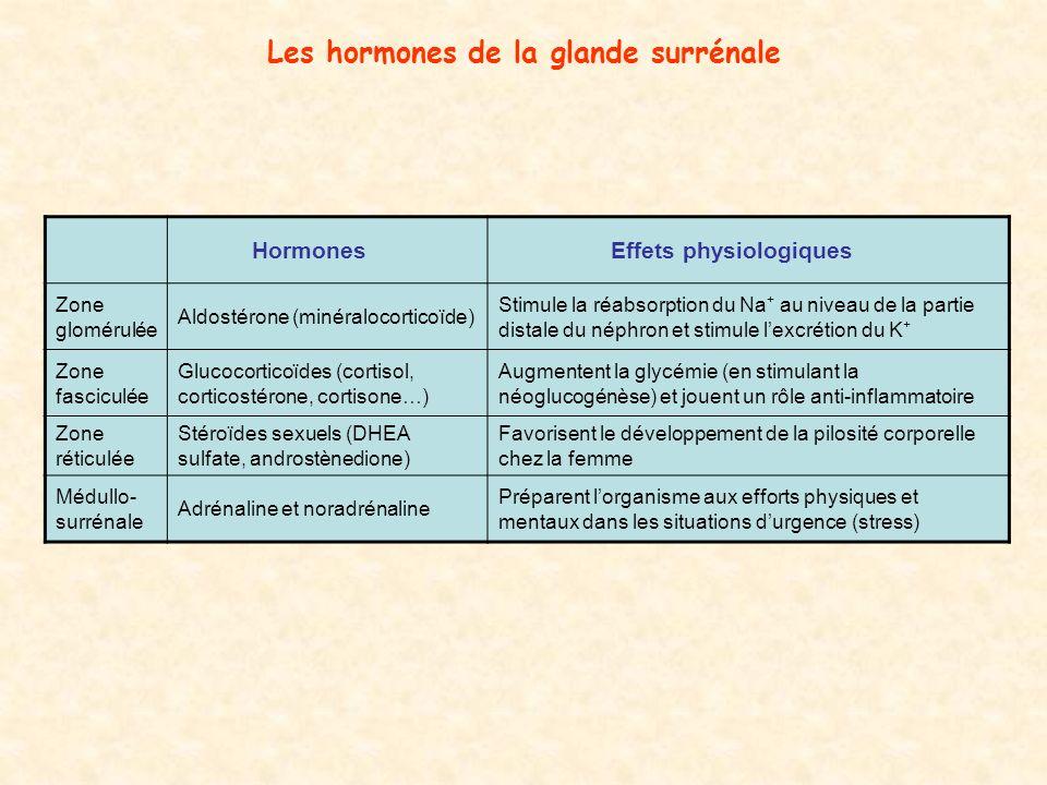 Les hormones de la glande surrénale Hormones Effets physiologiques Zone glomérulée Aldostérone (minéralocorticoïde) Stimule la réabsorption du Na + au niveau de la partie distale du néphron et stimule lexcrétion du K + Zone fasciculée Glucocorticoïdes (cortisol, corticostérone, cortisone…) Augmentent la glycémie (en stimulant la néoglucogénèse) et jouent un rôle anti-inflammatoire Zone réticulée Stéroïdes sexuels (DHEA sulfate, androstènedione) Favorisent le développement de la pilosité corporelle chez la femme Médullo- surrénale Adrénaline et noradrénaline Préparent lorganisme aux efforts physiques et mentaux dans les situations durgence (stress)