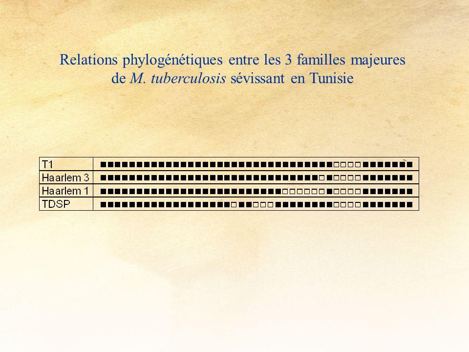 Relations phylogénétiques entre les 3 familles majeures de M. tuberculosis sévissant en Tunisie