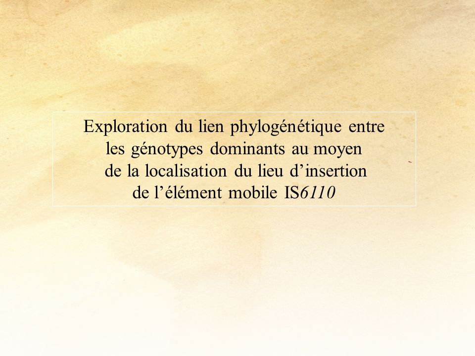 Exploration du lien phylogénétique entre les génotypes dominants au moyen de la localisation du lieu dinsertion de lélément mobile IS6110