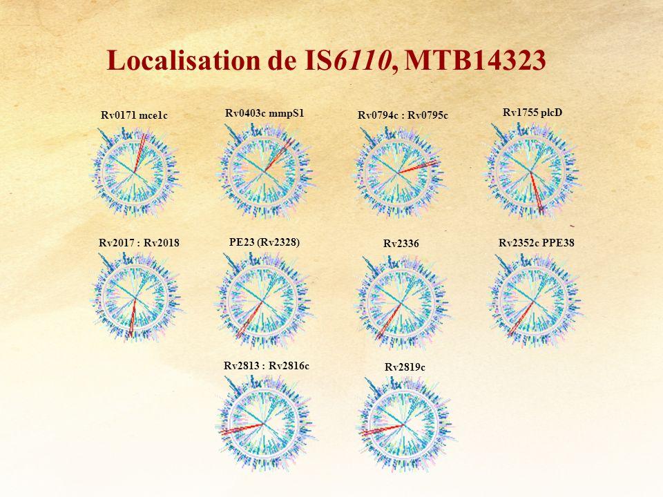Rv0171 mce1c Localisation de IS6110, MTB14323 Rv0403c mmpS1 Rv0794c : Rv0795c Rv1755 plcD Rv2017 : Rv2018 PE23 (Rv2328) Rv2336 Rv2352c PPE38 Rv2813 :