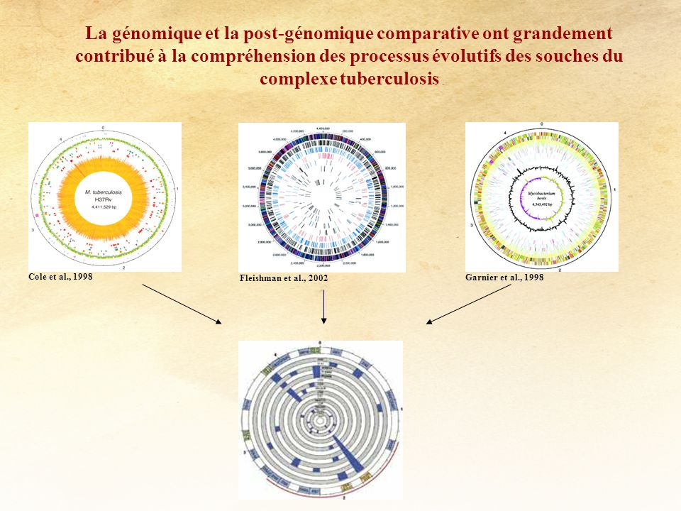La génomique et la post-génomique comparative ont grandement contribué à la compréhension des processus évolutifs des souches du complexe tuberculosis