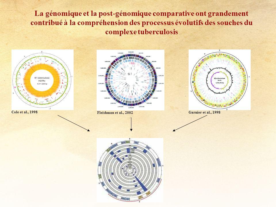 Tunisian Dominant Spoligotype Profiles (33%) 19, 22-24