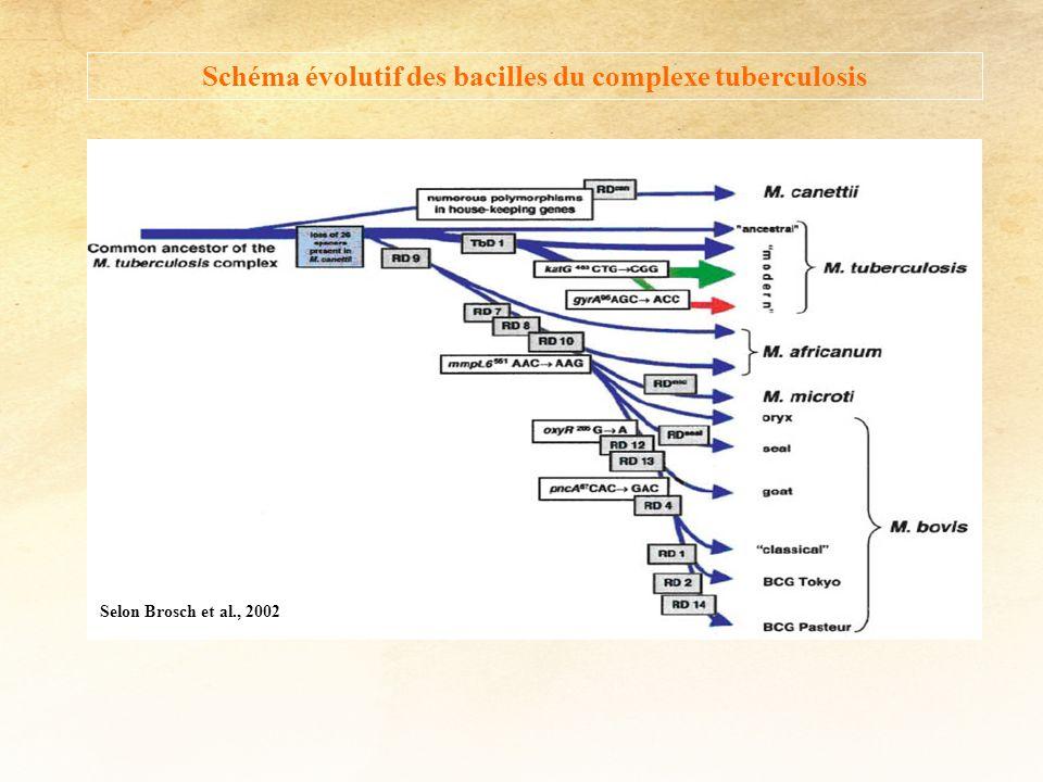 Selon Brosch et al., 2002 Schéma évolutif des bacilles du complexe tuberculosis