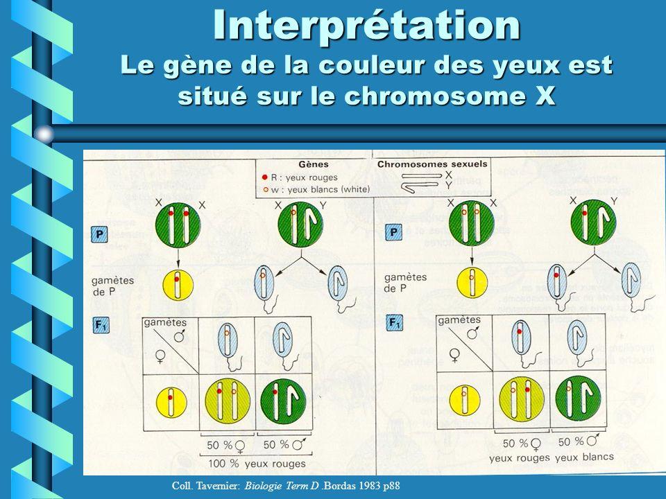 Interprétation Le gène de la couleur des yeux est situé sur le chromosome X Coll.