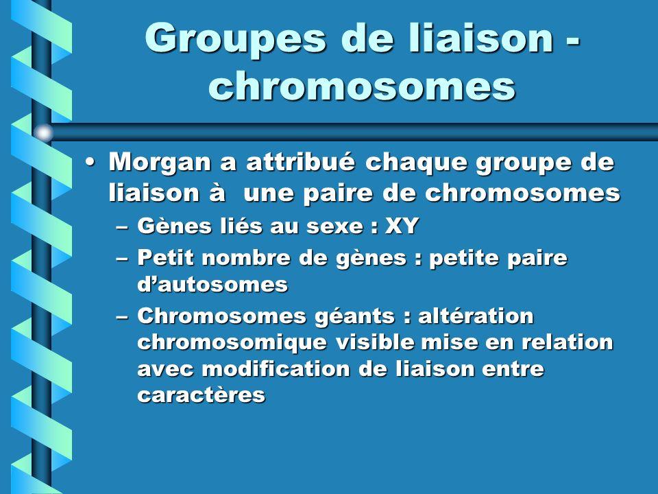 Groupes de liaison - chromosomes Morgan a attribué chaque groupe de liaison à une paire de chromosomesMorgan a attribué chaque groupe de liaison à une paire de chromosomes –Gènes liés au sexe : XY –Petit nombre de gènes : petite paire dautosomes –Chromosomes géants : altération chromosomique visible mise en relation avec modification de liaison entre caractères