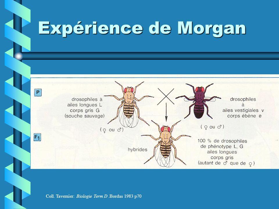 Expérience de Morgan Coll. Tavernier: Biologie Term D.Bordas 1983 p70