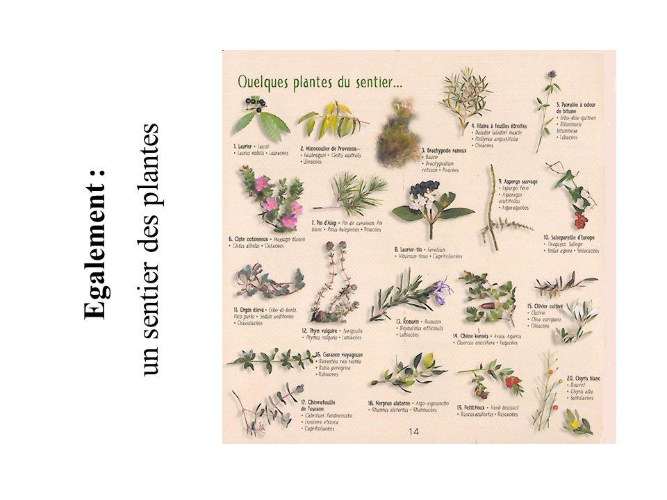 Egalement : un sentier des plantes