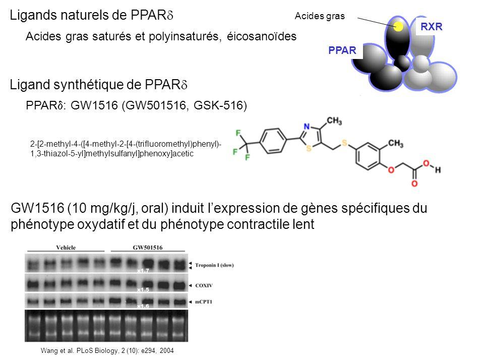 Ligands naturels de PPAR Acides gras saturés et polyinsaturés, éicosanoïdes PPAR : GW1516 (GW501516, GSK-516) 2-[2-methyl-4-([4-methyl-2-[4-(trifluoro