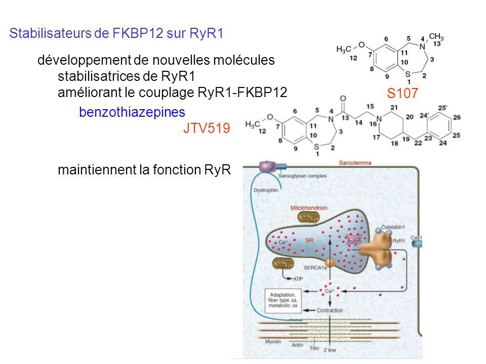 Stabilisateurs de FKBP12 sur RyR1 maintiennent la fonction RyR benzothiazepines JTV519 S107 développement de nouvelles molécules stabilisatrices de Ry