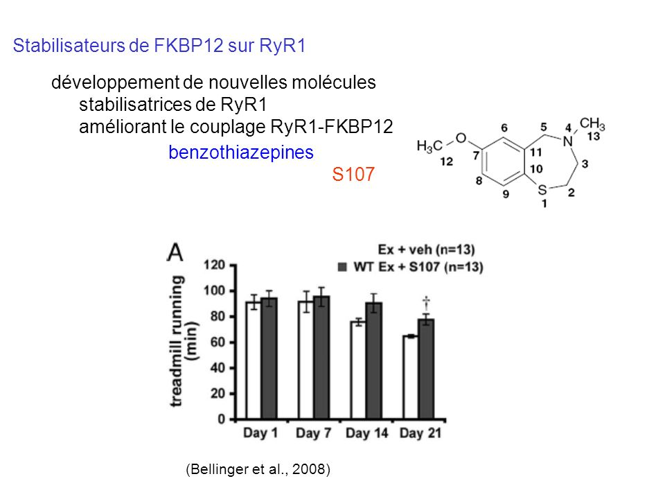 Stabilisateurs de FKBP12 sur RyR1 benzothiazepines S107 (Bellinger et al., 2008) développement de nouvelles molécules stabilisatrices de RyR1 améliora